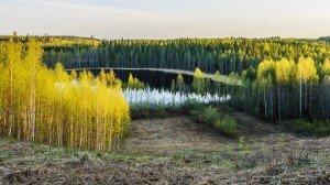 Наше Озеро Весной в Финляндии