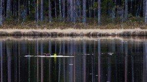 Бобры в нашем озере в Финляндии