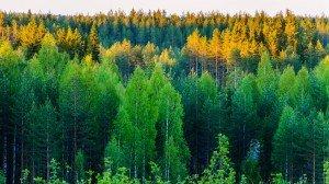 Вид с нашего пригорка в Финляндии