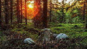 Лес на закате в Финляндии