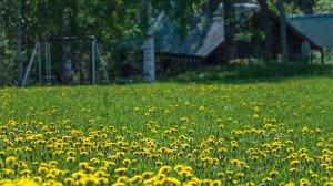 Лужайка, коттедж в Финляндии