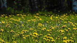 Лужайка в Финляндии