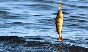 рыбалка2